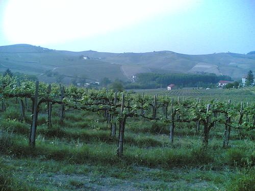 Langhe in Piedmont