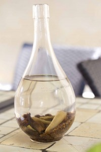 自产格拉巴酒( grappa)