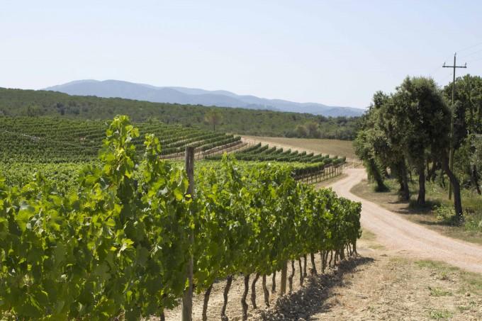 马赛多葡萄园 (Masseto vineyard)
