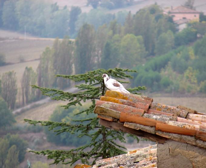鸡卵岩(Montone)上的鸟,