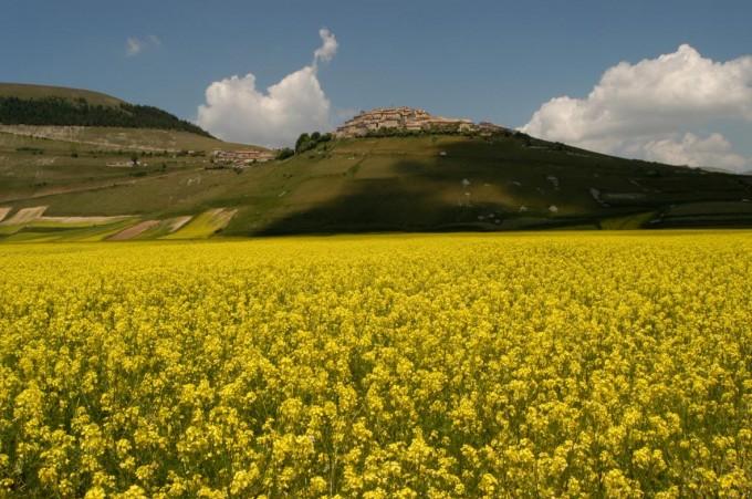 卡斯泰卢乔(Castelluccio)的诺尔恰(Norcia)(锡比利尼山(Sibillini ))