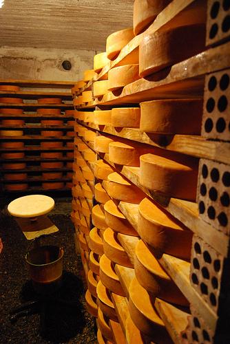 Fontina奶酪