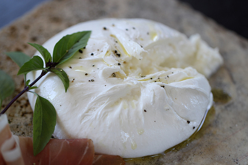 Burrata,Cathy Arkle拍摄
