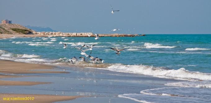 海鸥,Massimiliano拍摄