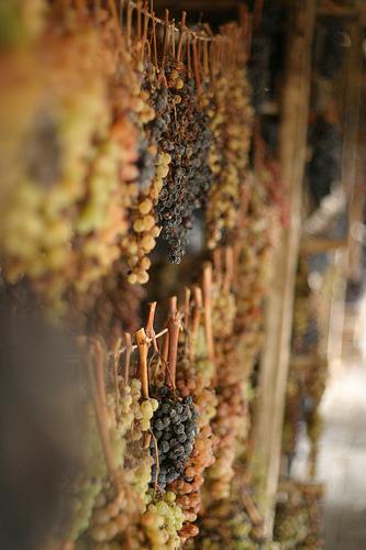 用来酿造Vin Santo的葡萄干,Chris Pencis拍摄