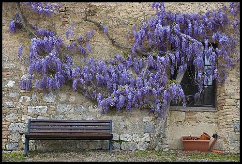 San Gimignano,Vitorio Benedetti拍摄