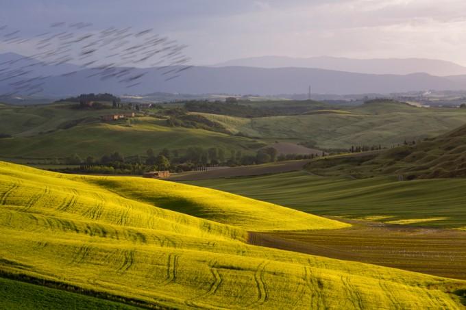 锡耶纳(Siena)乡村,Giuseppe Moscato拍摄