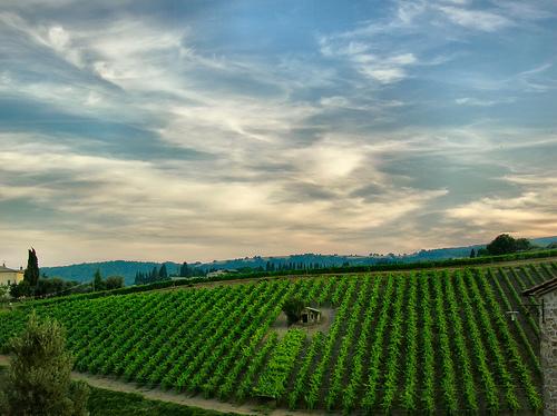 Montepulciano的葡萄园,Giampaolo Macorig拍摄