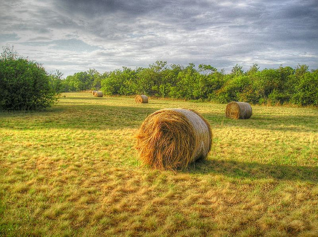 Trieste附近的稻草捆,Mariotto52拍摄