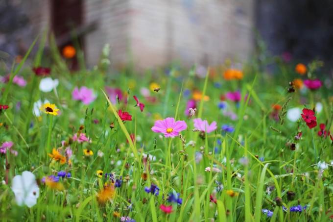 山上的花朵,Jano Fistialli拍摄