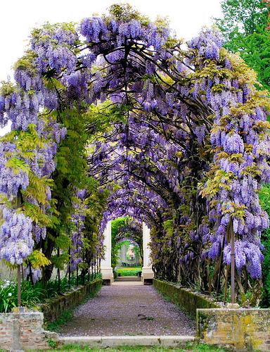 Villa Pisani的花园,Bernhard Eckert拍摄