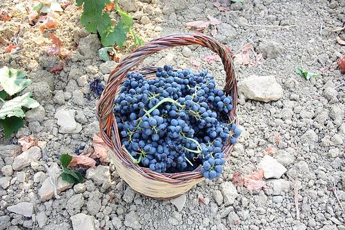西西里岛的葡萄丰收,Fabio Ingrosso拍摄