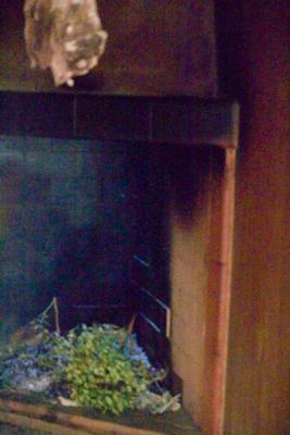(带有芳香植物的烟熏间用来烟熏奶酪和 salumi)