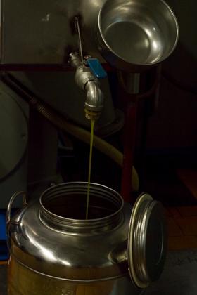 产出的橄榄油
