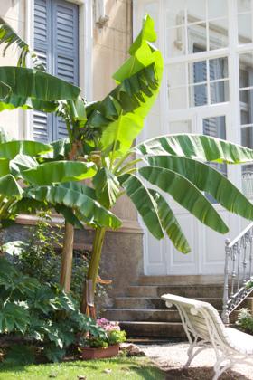 阿尔卑斯山脚下的香蕉树