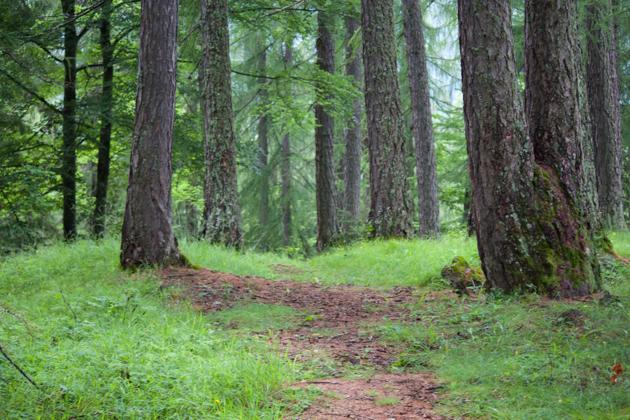 BAITA FRAINA前的森林