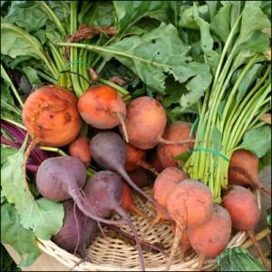 甜菜, La Grande Farmers' Market拍摄