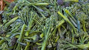紫花菜,Ethan H.拍摄