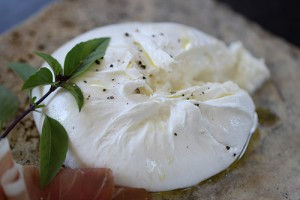 Burrata,Cathy Arkle