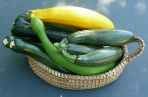西葫芦:绿皮西葫芦(深绿色),龙须(弯曲的浅绿色),罗马(绿色斑点),和西葫芦(黄色),Cristina Noviceglia拍摄