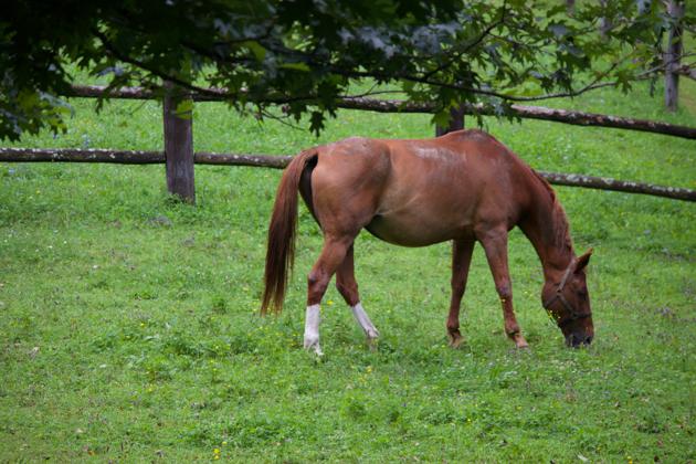 LA SUBIDA的马