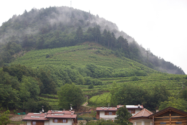 SANDRI家族后山的PALLAI葡萄园