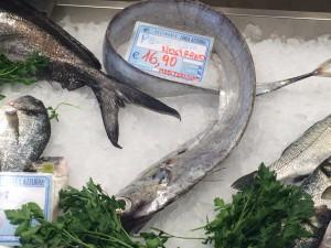 银叉尾带鱼