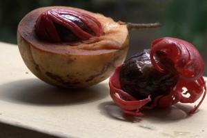 肉豆蔻干皮(红色的覆盖层和肉豆蔻(干皮内部的坚果),Jim Stahl拍摄