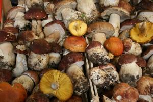 蘑菇,Claus Moser拍摄