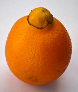 脐橙,Éamonn OBrien Strain拍摄