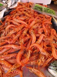 地中海红虾,Nate Gray拍摄