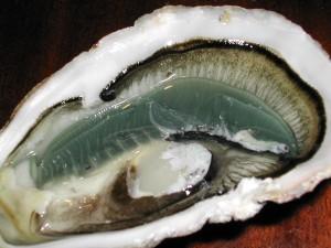 岩蚝,Wikimedia Commons拍摄