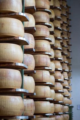 PARMIGIANO-REGGIANO奶酪轮