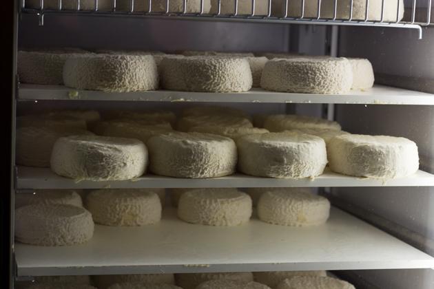 雷纳托的山羊奶奶酪