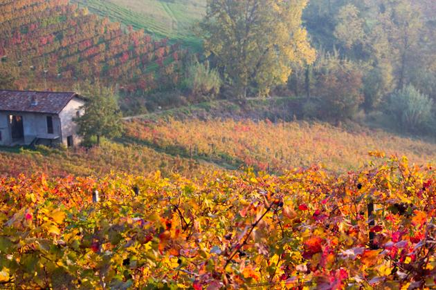 朗格地区的秋季