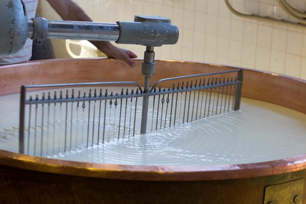 带网筛的桨正将凝乳打碎
