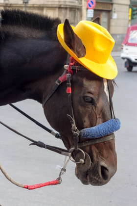 就连马也很有特色