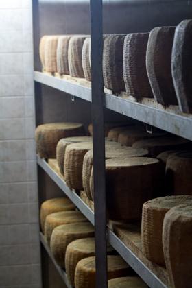 摆满PECORINO SICILIANO DOP奶酪的架子