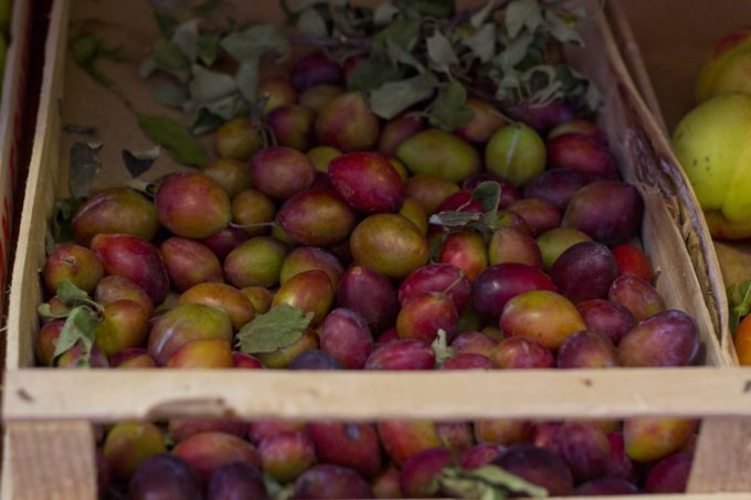 meimanrensheng-com-plums