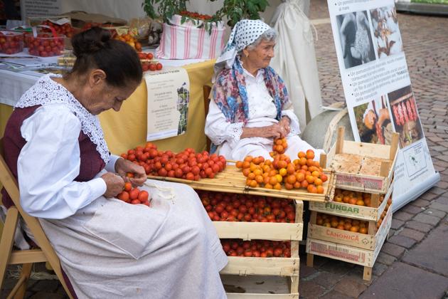 阿普利亚的女人正在把番茄扎成束