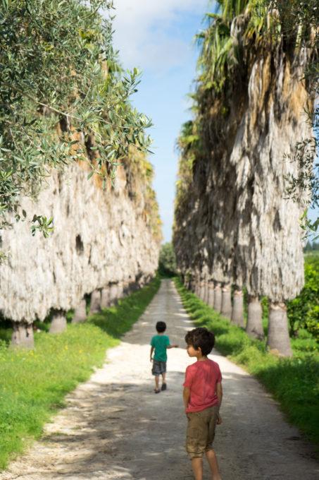 进入到MARCHESI DI SAN GIULIANO的柑橘水果园