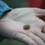 世界上最小的松露?